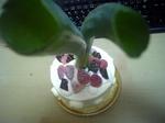 negi_cake02.jpg